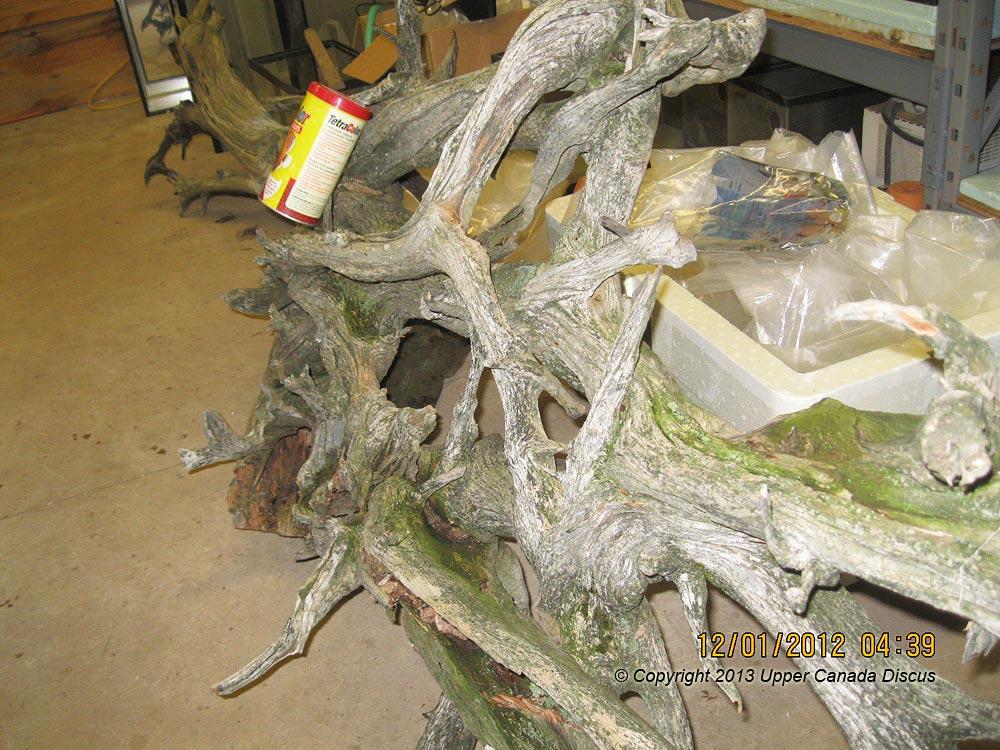 Canada Driftwood Aquarium