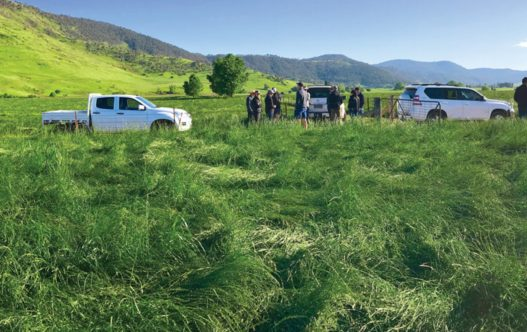 Everlast LE Perennial Ryegrass in paddock with people and utes