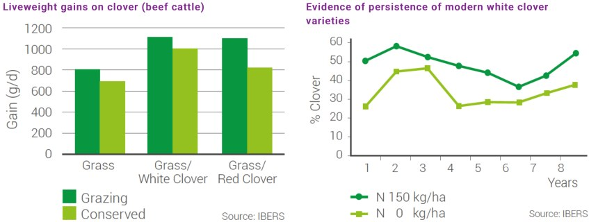 Charts about Liveweight gains one clover and evidence of persistence of modern white clover varieties
