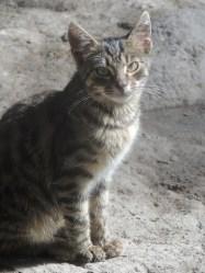 Yard kitten!