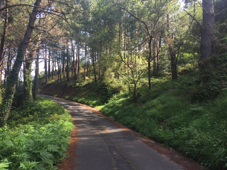 hike through the forstes on the way to San Juan de Gaztelugatxe