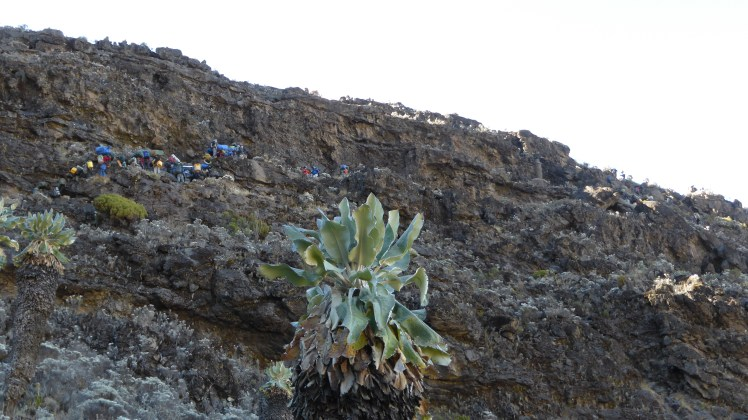 Barranco Wall, Kilimanjaro