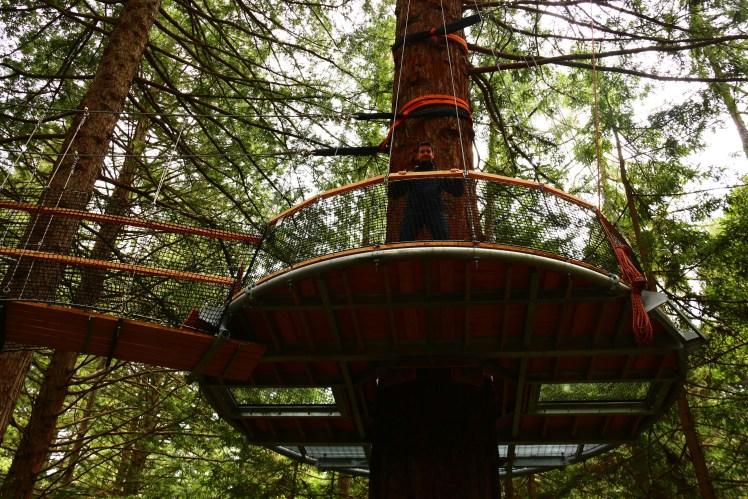 Highest and newest platform at the Redwoods Treewalk in Rotorua Nez Zealand