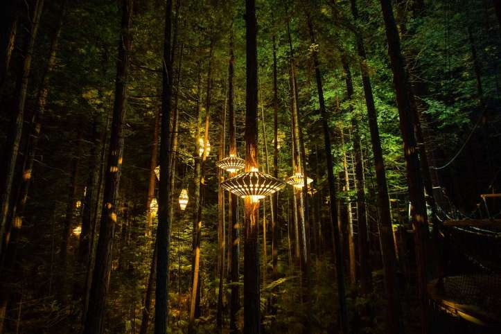 treewalk Lanterns by night