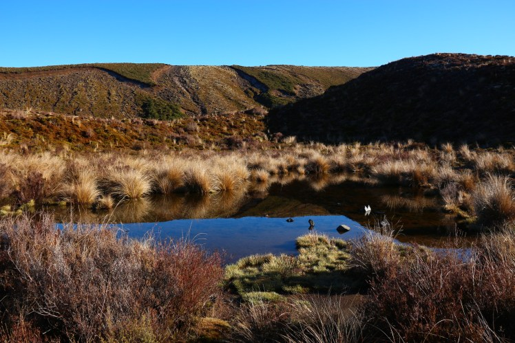 vegetation in the Soda Springs area, Tongariro Alpine Crossing, New Zealand