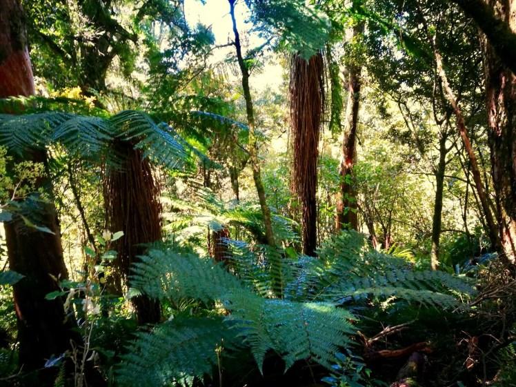hike down Tongariro, through lush vegetation of ferns