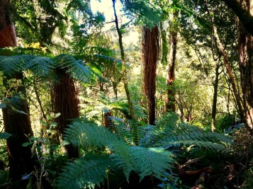 hike down Tongariro, through lush vegetation of ferns