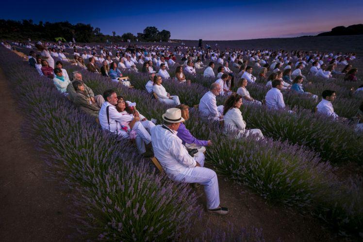 SpainSummer Travel Tips: brihuega lavanda lavender music festival spain