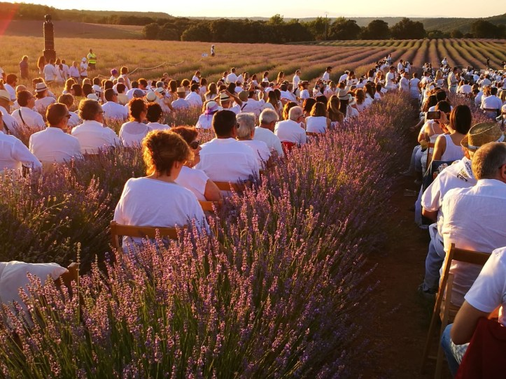 sunset in the lavender fields of Brihuega, Festival de la lavanda