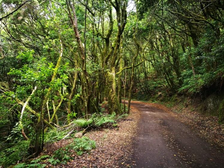 la Gomera Garajonay laurel forest hiking path