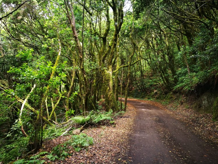 la Gomera Garajonay laurel forest hiking path