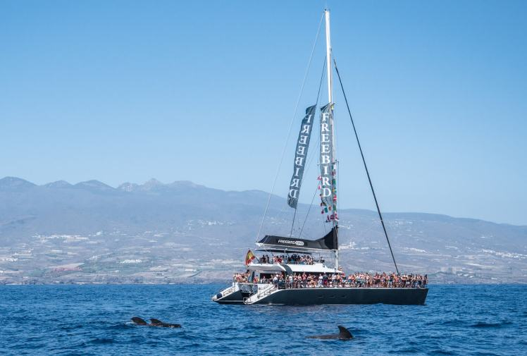 freebird one catamaran Tenerife Whale Cruise