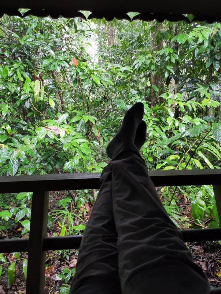 Sukau Rainforest Lodge  kinabantagan canopy