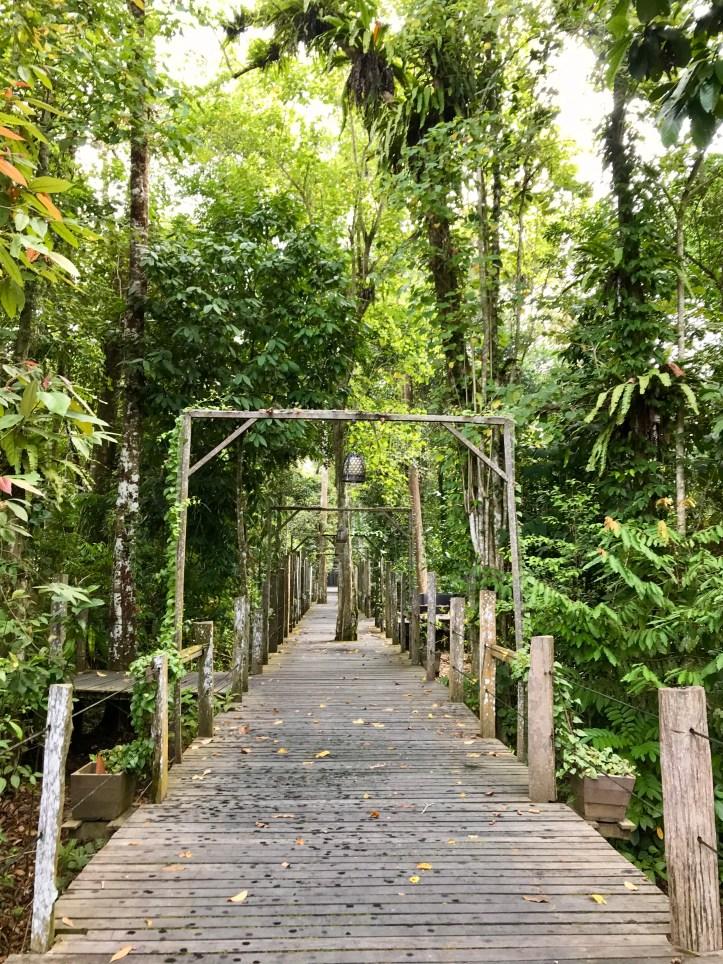 sukau rainforest lodge the broadwalk