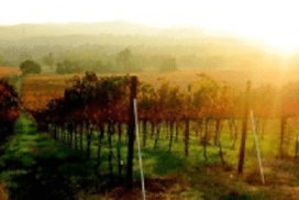 Take an Affordable Wine Country Vacation