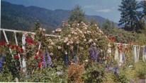 Rose Garden at Fairyland