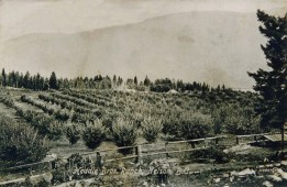 A postcard of the Heddle Bros Ranch early 1900's