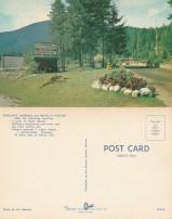 Starlite Drive In postcard -P.O. files