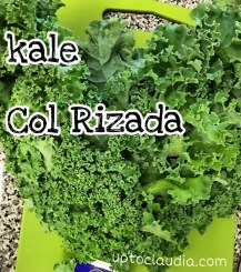 Benefits of raw kale