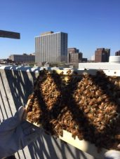 Hive with a view.