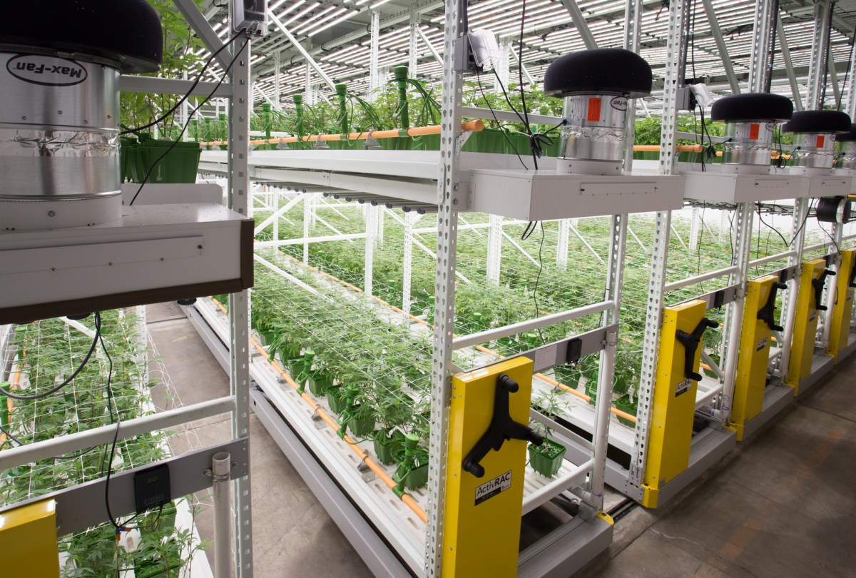 Cannabis-cultivation equipment financing