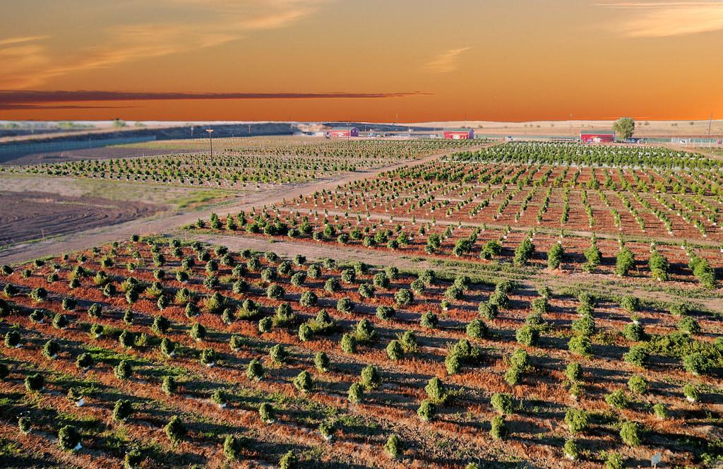 marijuana financing farms