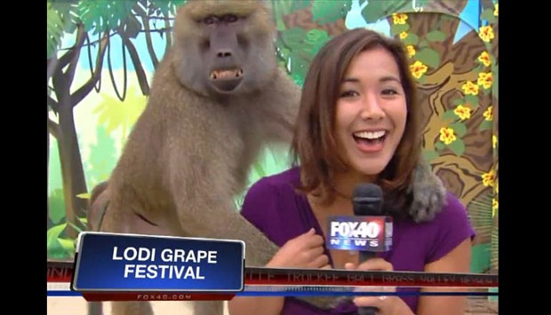 monkey grope 2