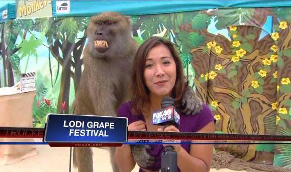 monkey grope