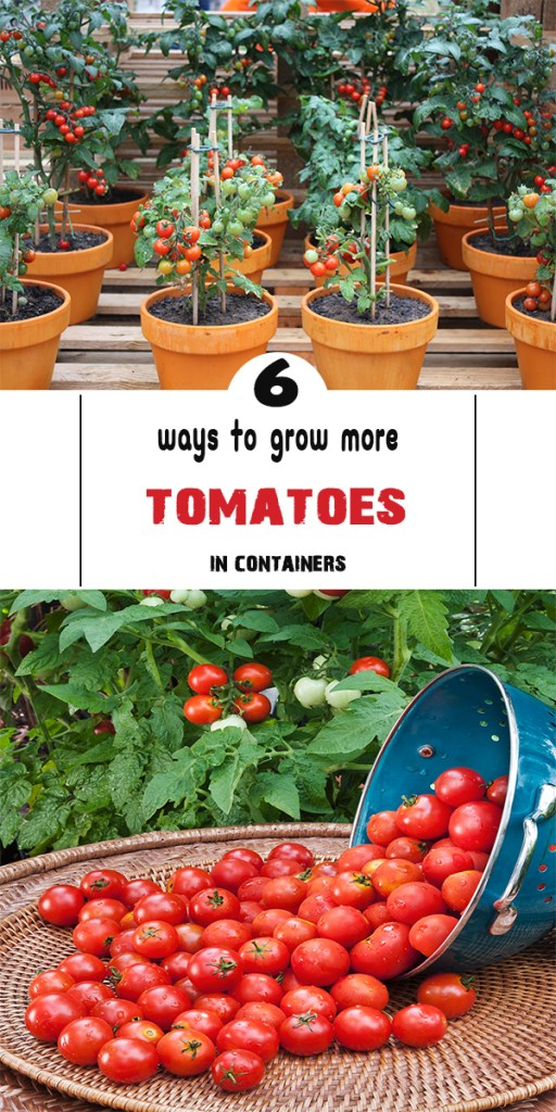 6 ways to grow more tomatoes in containers