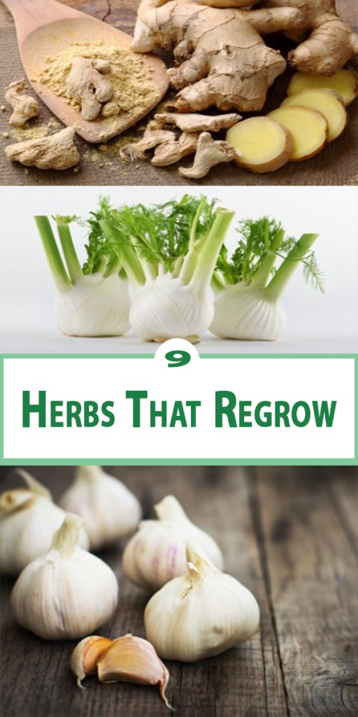 9 Herbs That Regrow