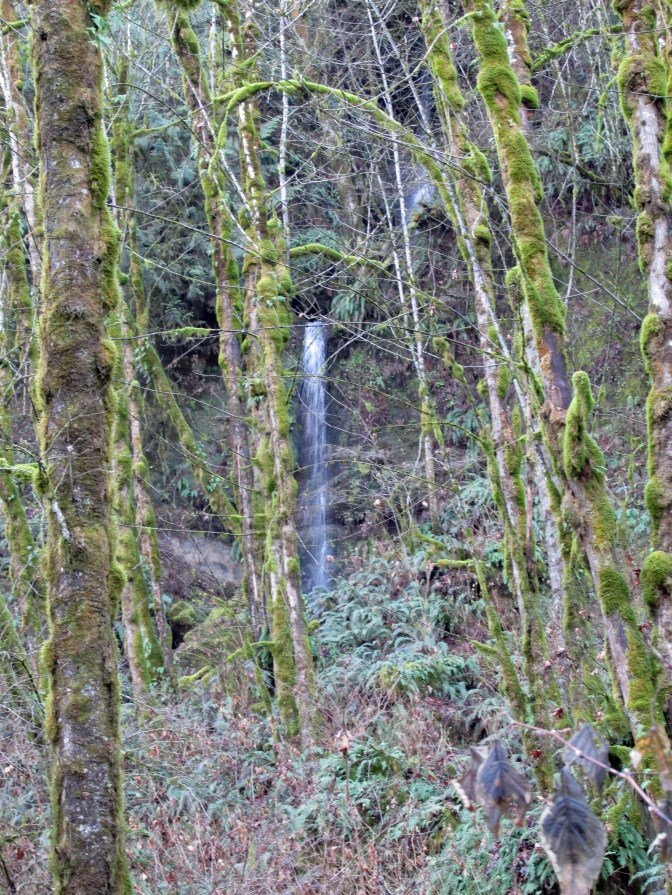 Waterfall in Sandy River Gorge.