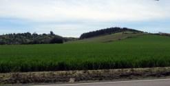 Chehalem Ridge vineyards.