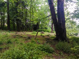 in-the-woods-at-wilkes-creek-wilkescreek-wilkescreekheadwaters_26658649766_o