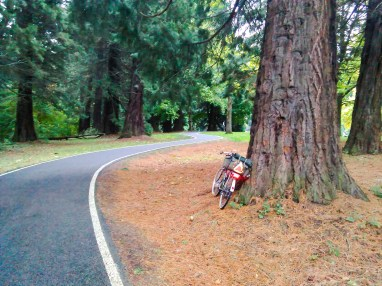 big-trees-dwarf-my-bicycle-pierpark_30404246446_o