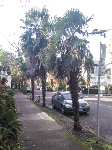 when-i-stayed-in-the-vista-st-clair-these-palms-were-babies-now-they-have-grown_30539985043_o