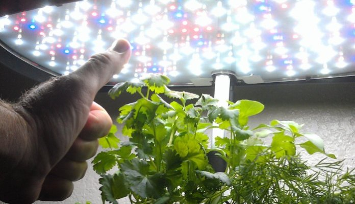 Indoor Vertical Farming Jim Pantaleo