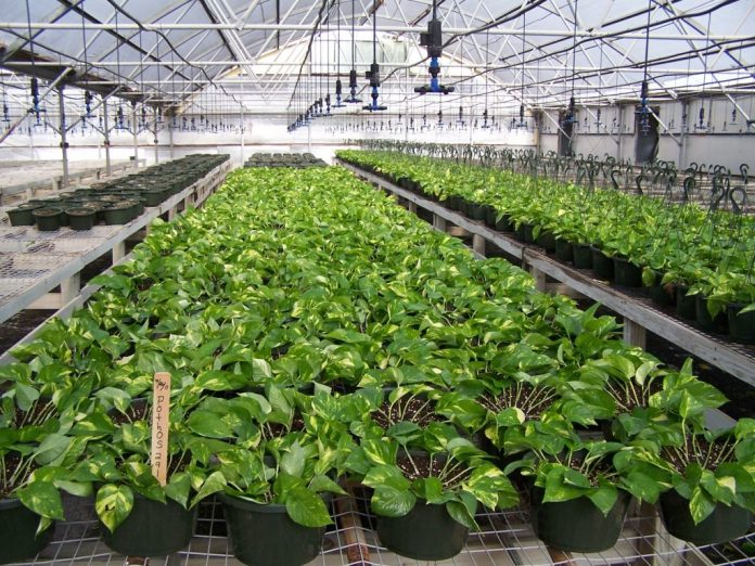 MISSION-texas-greenhouse-for-lease