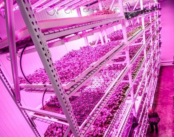 green-sense-farms-startup