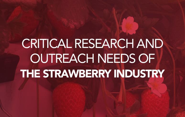 strawberry survey