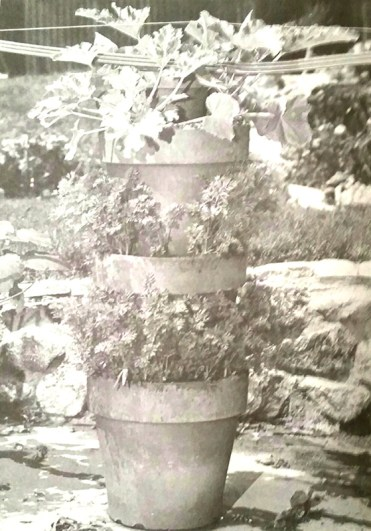History Of The Tower Garden Urban Ag News
