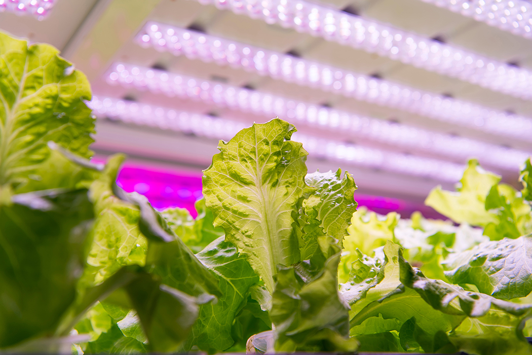 The Value of Third-Party Verification for Horticultural Lighting