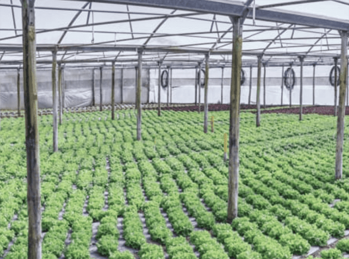 Horticulture Market Manager open role at Moleaer