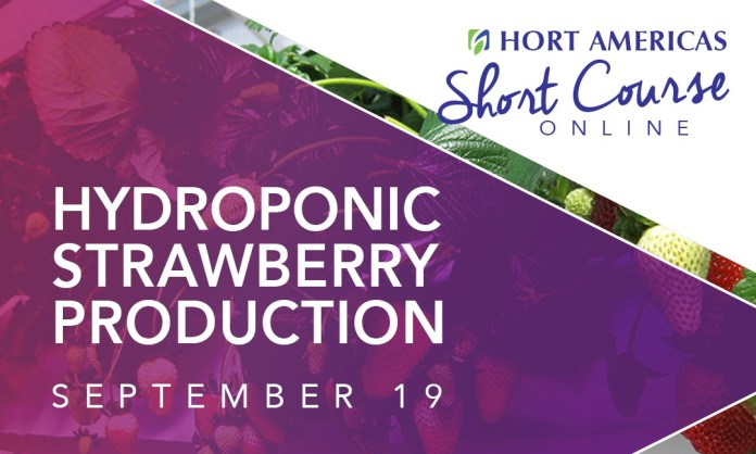 Hort Americas offers new Short Courses online, next is on hydroponic strawberries