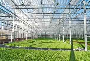 Gotham Greens Greenhouse Interior