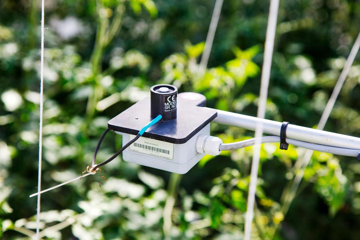 Wageningen Greenhouse challenge