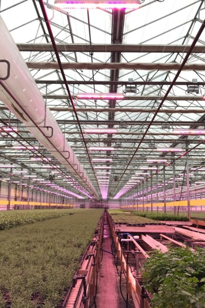Shenandoah Growers, Virginia