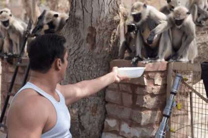 Salman feeding monkeys