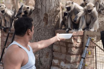 Salman feeding monkeys