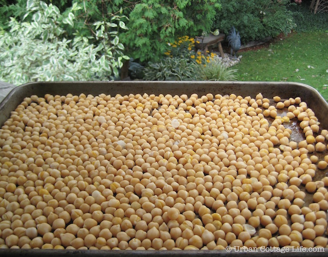Do-It-Yourself Chickpeas © | UrbanCottageLife.com