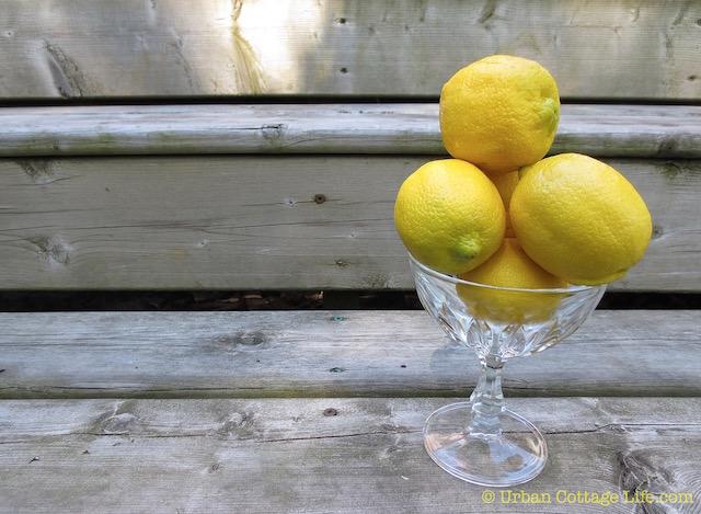Thinking Lemony Thoughts  |© UrbanCottageLiife.com